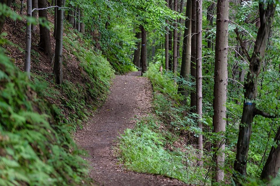 photo d'un chemin ofrestier poru la pratique du vtt rando